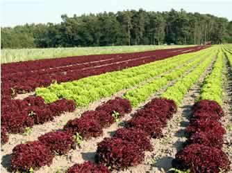 Farma Litochlebových